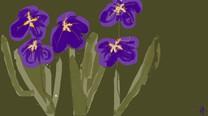 Irisea