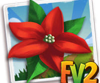 New Crop  Christmas Flower          (Coming Soon)