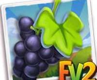 New Crop Aglianico Grape  (Coming Soon)