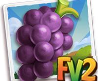 New Crop  Baga Grape  Dec 16 2019