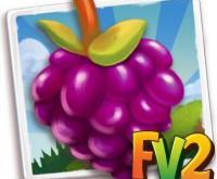 New Crop  Royal Purple Raspberry        Oct 7 2019