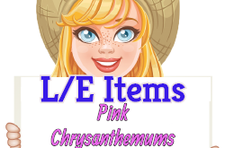 Add vibrancy with Pink Chrysanthemums! (Market LE Items) Sept 23 2019
