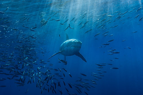 Holdem Shark 100bb