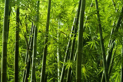 Bamboo Powder in Skin Care