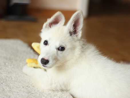 Essentials Every New Pet Owner Should Have From the Start