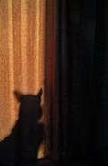 cody-shadow-curtain.jpg