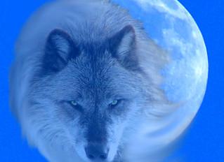 CELEBRATING THE WOLF MOON