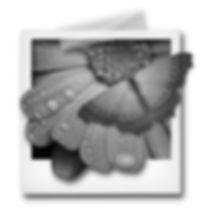 polaroid-desaturation.jpg