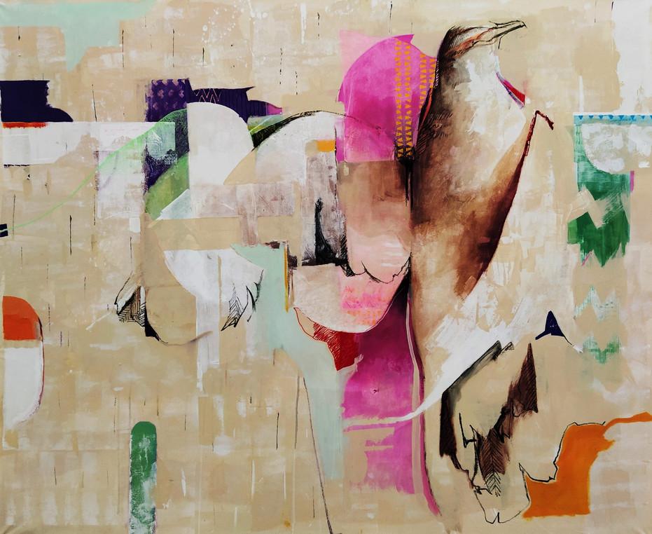 Zenaida auriculata - Torcaza
