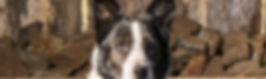 Girl, the head dog.jpg