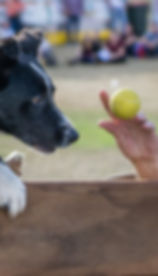 Dog Jump.jpg