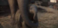 dumbo-rgb-021-bj-0340-v0465-1082.jpg