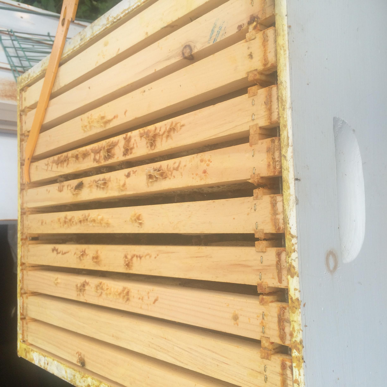 10 Frame hive