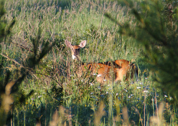 Summertime Blues: 3 things hunters can do in the hot summer months