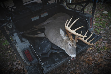 Keys to Getting a Great Whitetail Mount