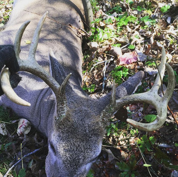 Is Spring the Most Important Season for Whitetail Hunters?