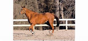 A horse sold through Chateau Vista and Associates