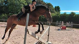 Chateau Vista and Associates Horse