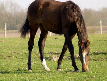 Electra as a Yearling