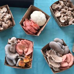 Mushroom Quarts.jpg