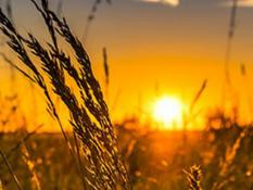 Estrés por calor en monogástricos y beneficios de la suplementación con Intest-Plus
