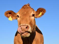 Edulcorantes en producción animal