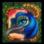 Peacock Face.jpg
