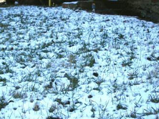 Winterizing your lawn in Colorado