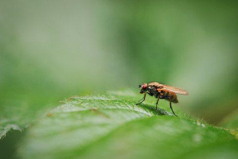 bug closeup