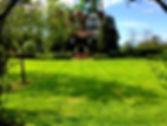 tonte pelouse entretien