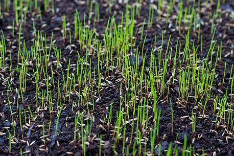 Wann-Rasen-säen.jpg