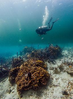 tauchen-panama-unterwasser