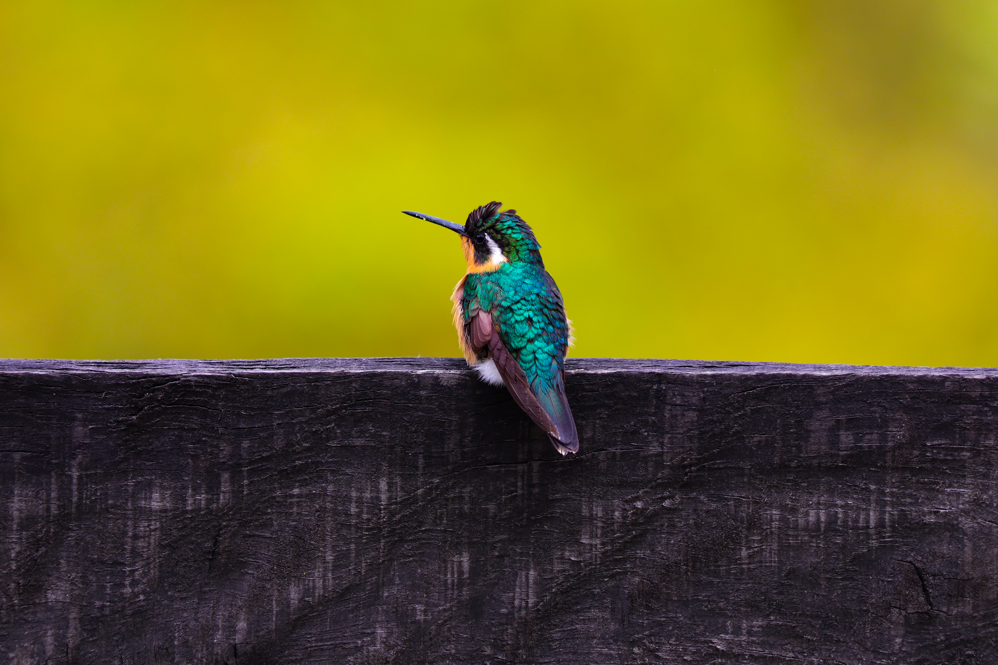 kolibri-nature