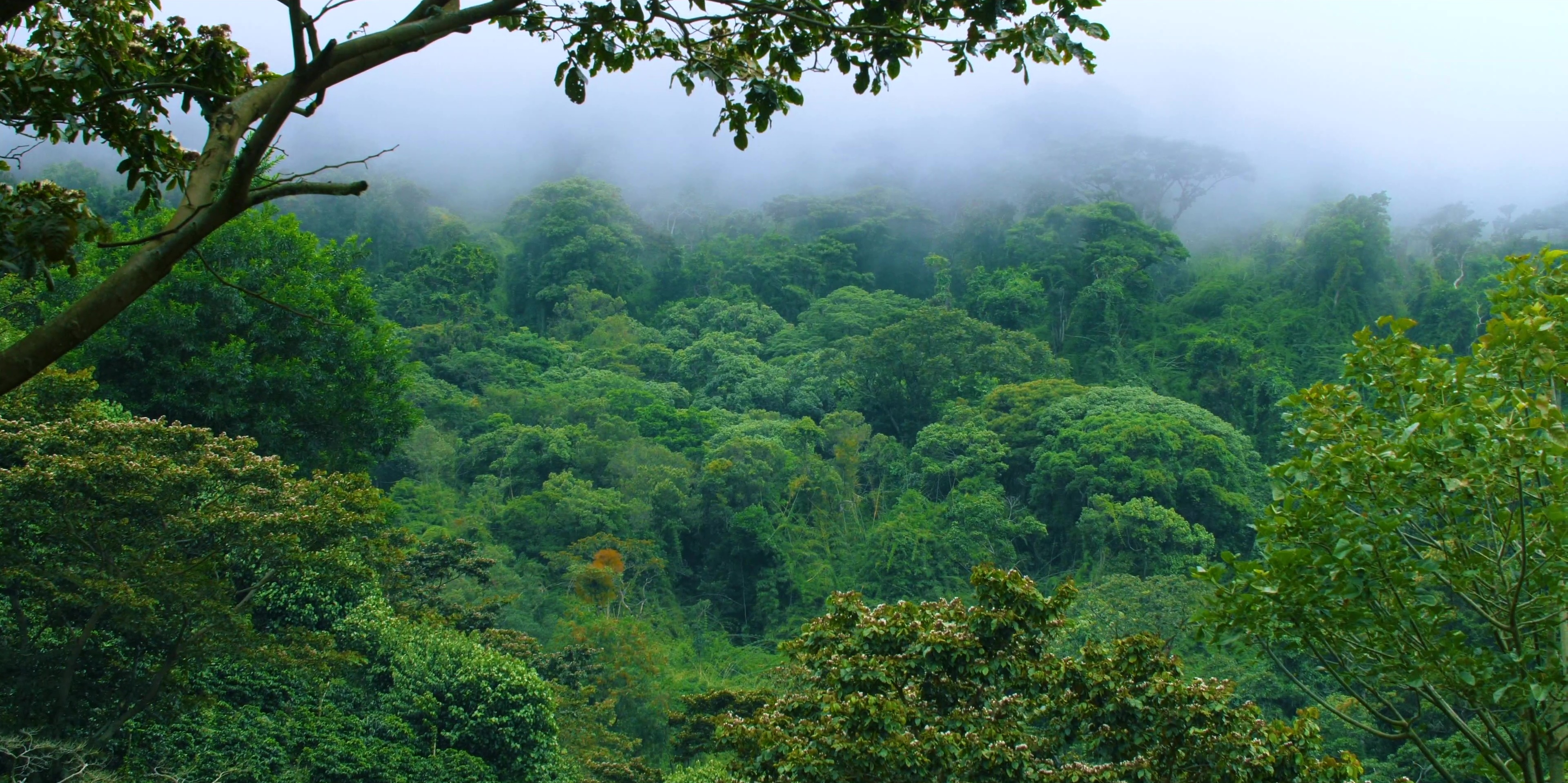 cloud-forest-chiriqui-panama-nature
