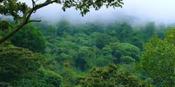 cloud-forest-chiriqui-panama-nature