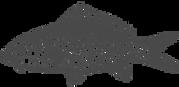 Carp%20Fish%20Sketch_edited.png