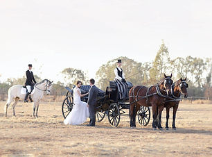 horse_carriage_hire_wedding_pretoria.jpg
