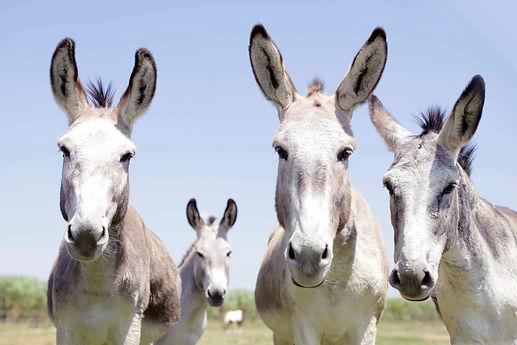 Donkey_san.jpg