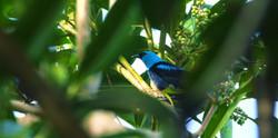 birdwatching-panama-tour-gapa-travel
