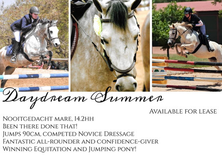 Horses and Ponies for Lease in Pretoria East, at Terrouges