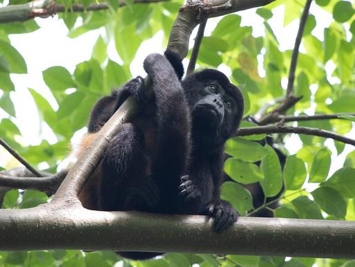 Endemische Tierarten in Panama