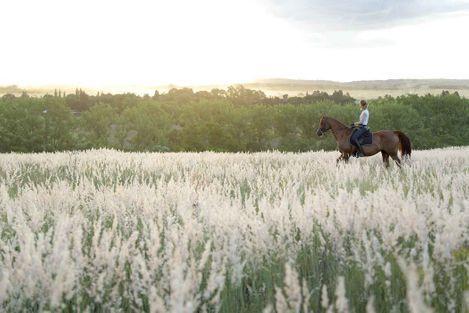 scenic_horse_outrides_pretoria.jpg
