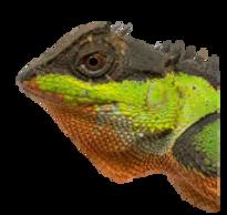 Lizard_edited.png