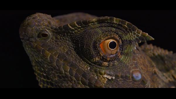 Reptile.png