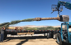 Palm Tree Delivery 1.png