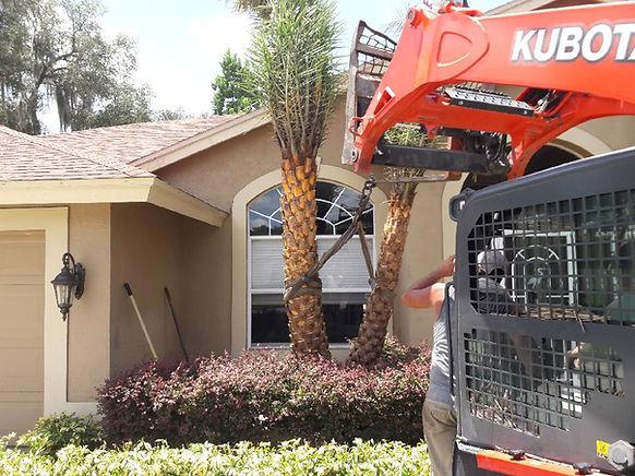 Palm Tree Removal.jpeg