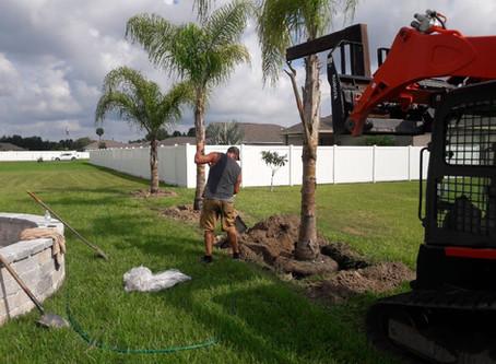 Planting Palms