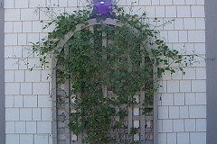 Curved Top Trellis