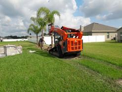 planting the palm tree.jpeg