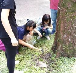 植微系師生檢查樹木取樣